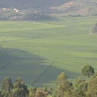 Sorwathe Tea Factory & Plantation