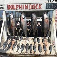 Dolphin Docks Deep Sea Fishing