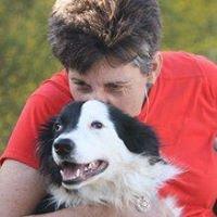 Cheeky Dog Obedience Training