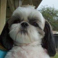 Paws-itively Purr-fect Pet Salon