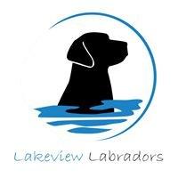 Lakeview Labradors