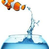 Tideline Aquatics