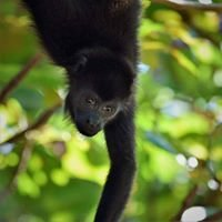 SIBU Wildlife Sanctuary