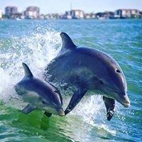 Dolphin Racer Speedboat