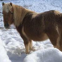 Trinity Rescue and Equine Sanctuary