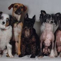American Pet Grooming Salon & Boutique