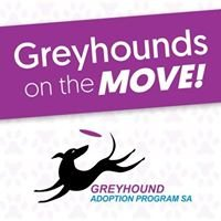 Greyhounds On The Move