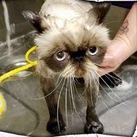 Animal Medical Center - Auburn, CA