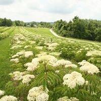 Nature's Organic Haven