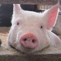 The Saitama Livestock Farm co,ltd