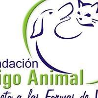 Animales perdidos o encontrados Buga  Fundación Amigo Animal