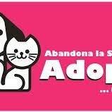 Adopción Perros Y Gatos Barbosa