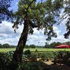 Hyde Park Farm & Polo Club