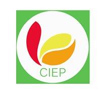 Consejo Intersectorial Para La Educación Peruana