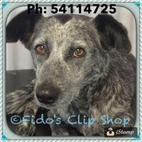 Fidos Clip Shop.