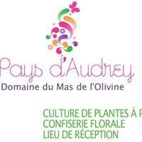 Au Pays d'Audrey - Mas de l'Olivine