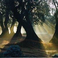 Huile d'olive du Domaine de Peyrebelle
