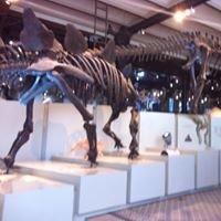 Musée Royal Des Sciences Naturelles De Belgique