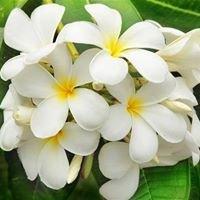 Kwiaciarnia Jaśmin