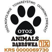 """OTOZ """"Animals"""" - Schronisko Dąbrówka"""