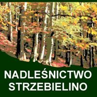 Nadleśnictwo Strzebielino, Lasy Państwowe