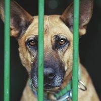 Na psa urok. Szczecińskie zwierzęta do adopcji.