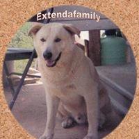 Extendafamily Society,Inc.