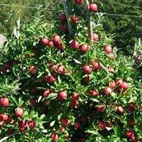 Bartlett's Orchard