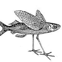 Gasthaus zum Fischmeister