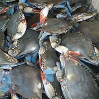C-Port Seafood LLC.
