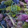 Artistic Blossoms
