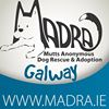 MADRA - Mutts Anonymous Dog Rescue and Adoption thumb