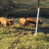 Healing Acres Farm