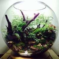 Nature Art terrarium Landscape