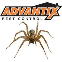 Advantix Pest Control/Impact Pest Services