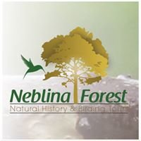 Neblina Forest Birding Tours