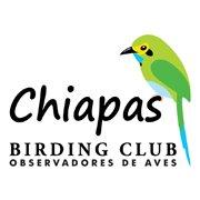 Chiapas Birding Club - Observadores de Aves