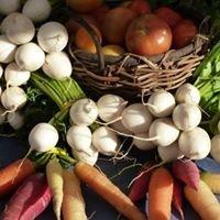 UMass Vegetable & Fruit IPM Network