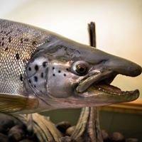 Carlson's Fish Taxidermy & Northeast Troller