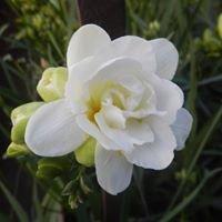 LaSalle Florists