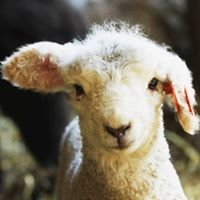 Massachusetts Sheep & Woolcraft Fair