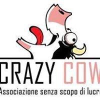 Crazy Cow Fest