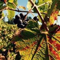 Ankeny Vineyard
