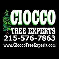 Ciocco Tree Experts