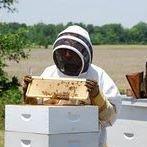 Peace Bee Farm