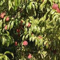 Talleys Fruit Farm