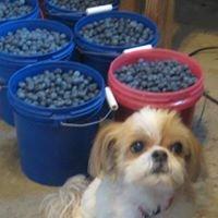 Craft's Blueberry Farm