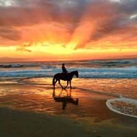 Tassiriki Ranch Beach Horse Riding & Holiday Cabins