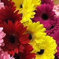 Kennesaw Florist & Cookies