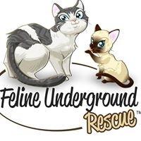 Feline Underground Rescue